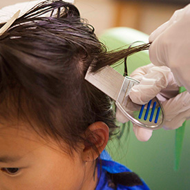 Comb-Out Lice Treatment in Pearland, Texas