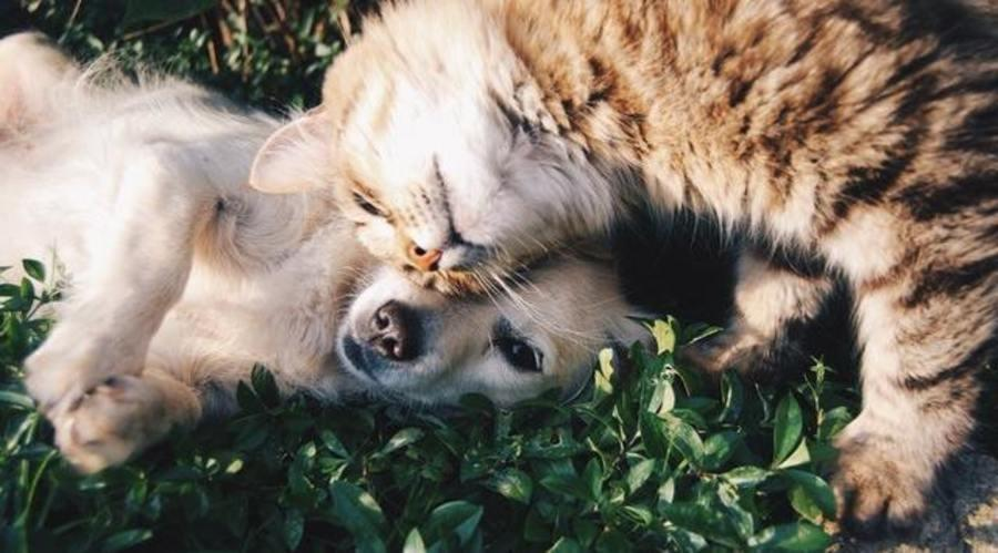 Can Your Pets Get Head Lice?